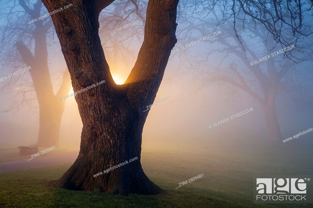Stock Photo: Foggy winter evening at Queen's Park in Brighton, East Sussex, England.
