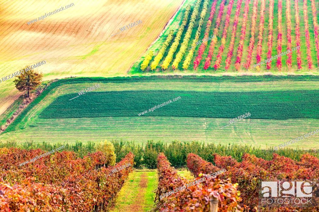 Imagen: Castelvetro, Modena, Emilia Romagna, Italy. Sunset over the Lambrusco Grasparossa vineyards and rolling hills in autumn.