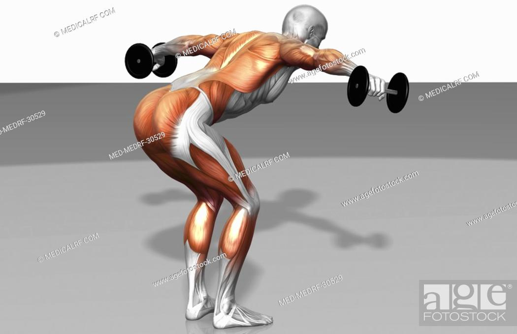 Stock Photo: Dumbbell rear lateral raise Part 1 of 2.