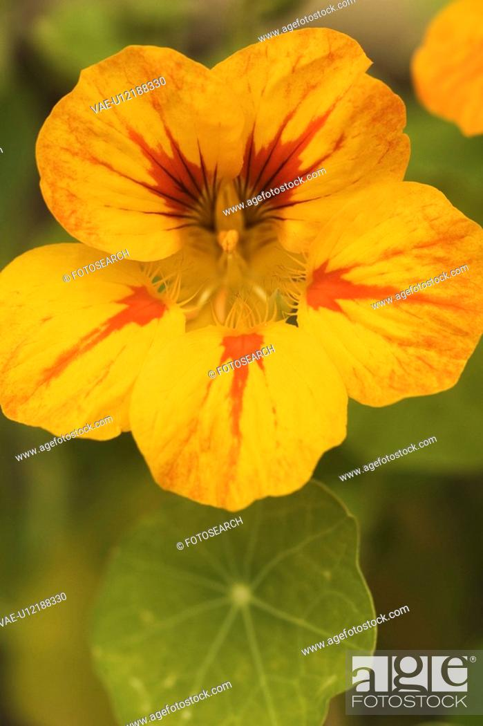 Stock Photo: Background, Beauty, Close-Up, Colorful, Flora.