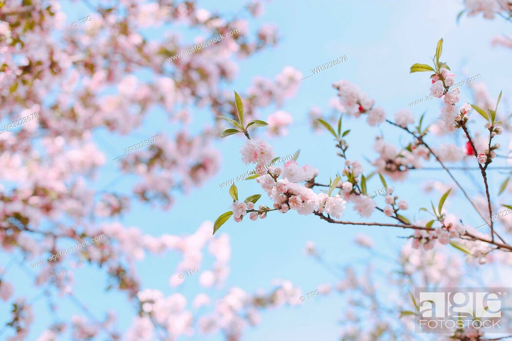 Stock Photo: Spring scenery;China.