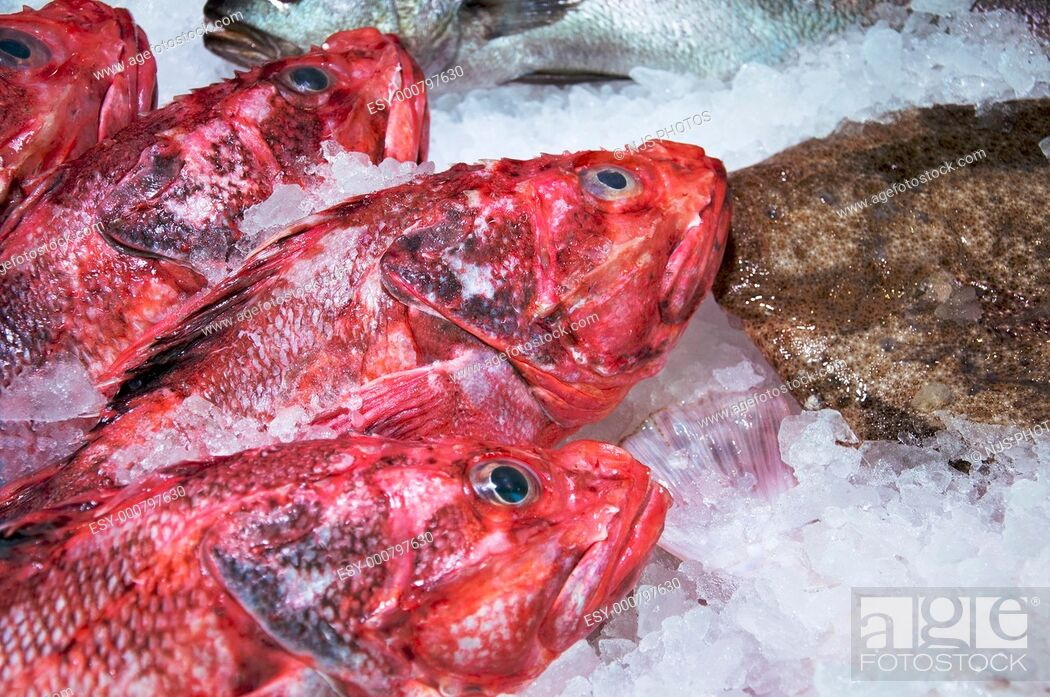 Stock Photo: Scorpionfishes Scorpaena Scrofa in a fish shop of San Miguel Market Madrid, Spain.