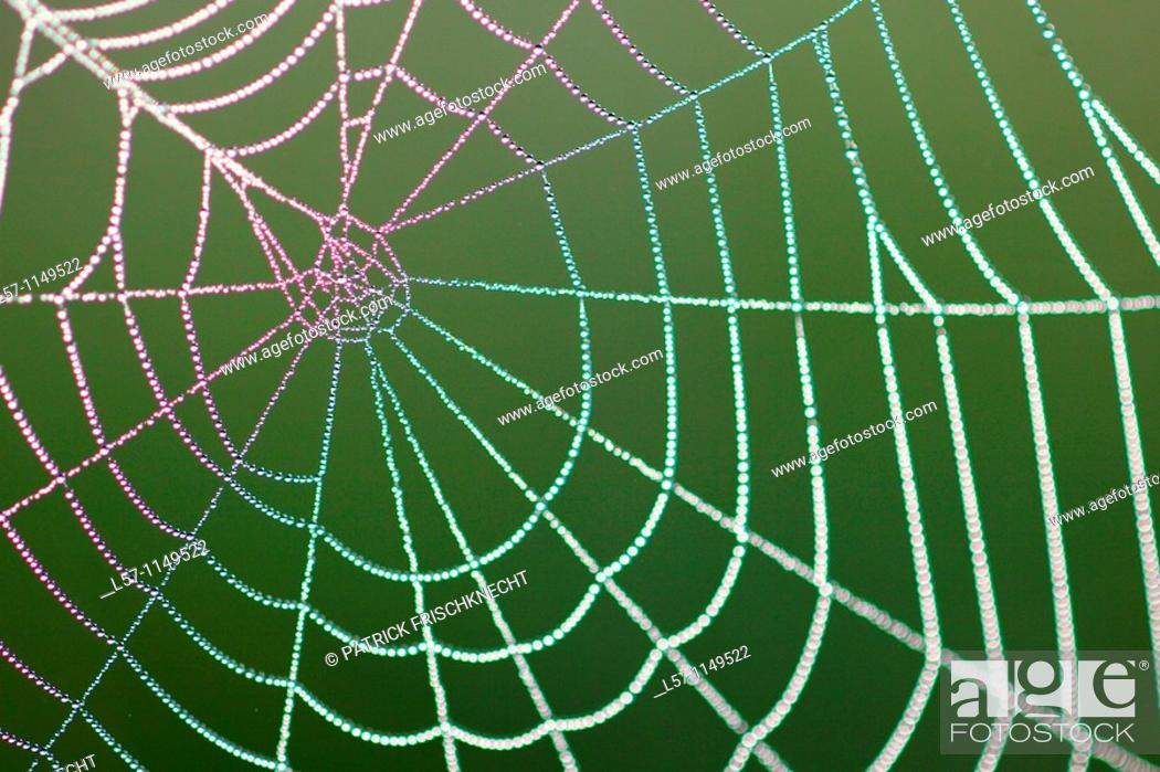 Stock Photo: spider web full of dew drops, Switzerland.
