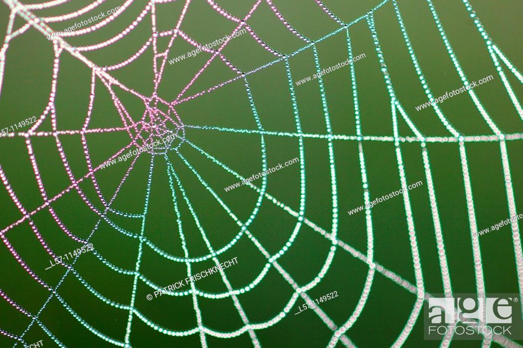 Stock Photo: spider web full of dew drops, Switzerland.