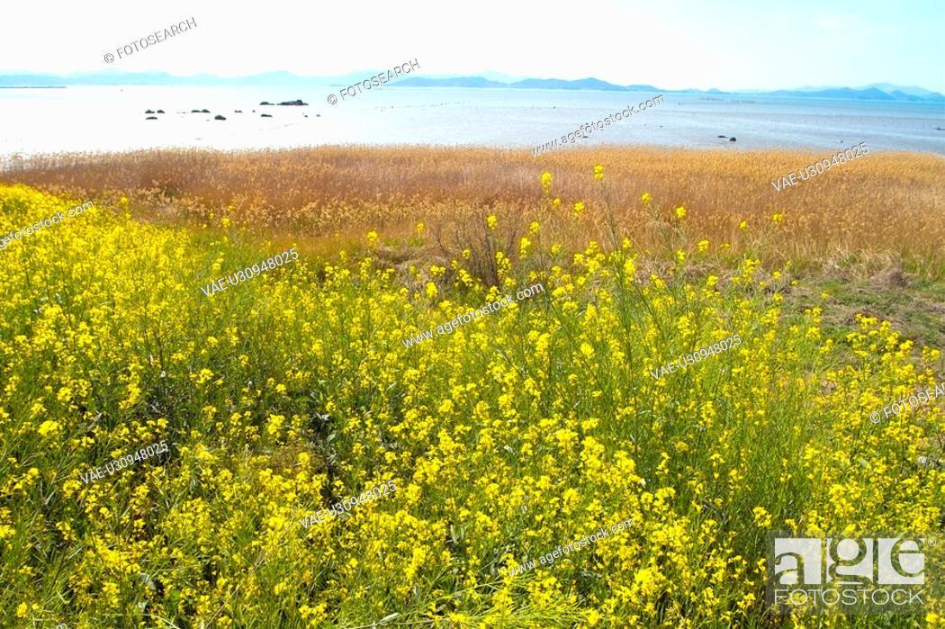 Stock Photo: plants, scenery, plant, flower, field, flowers, nature.