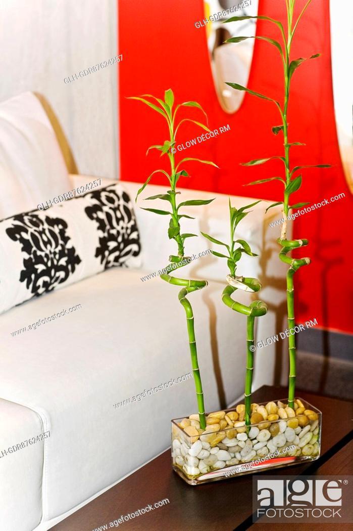 Photo de stock: Bamboo stalks on a table.