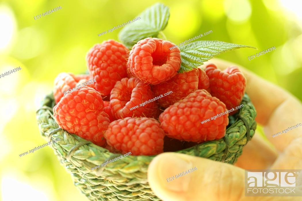 Imagen: Raspberries.