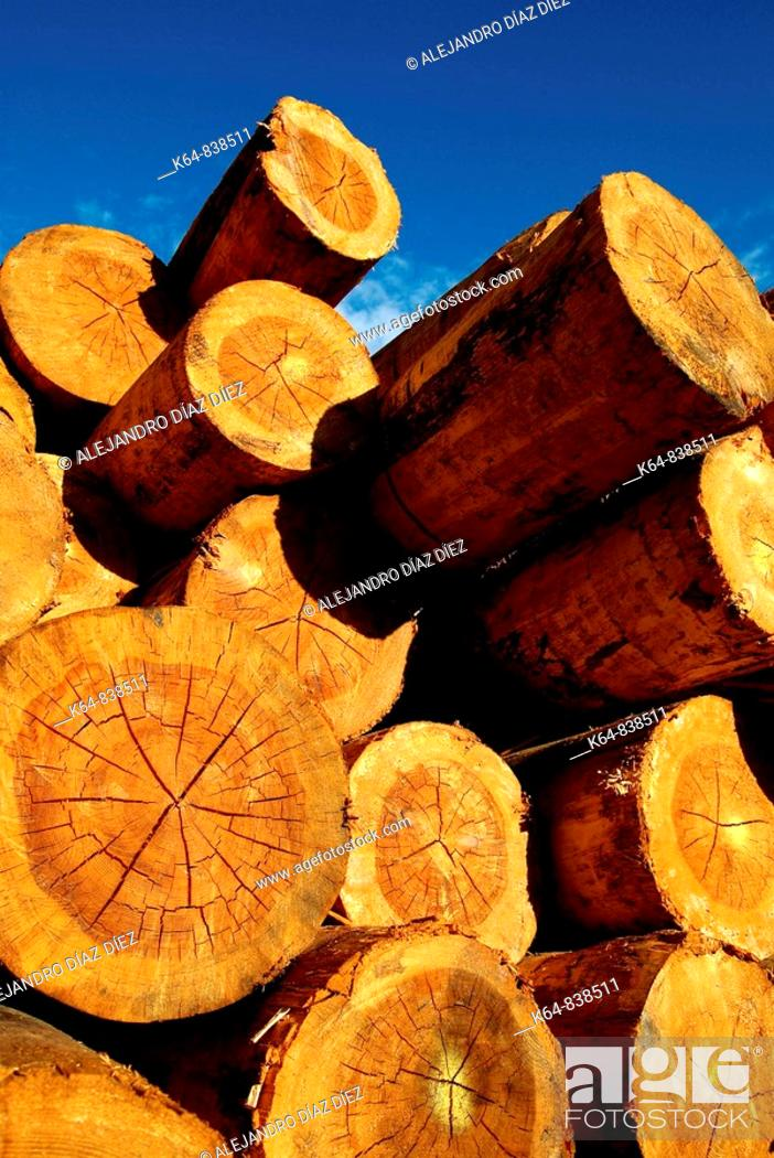 Stock Photo: Timber.