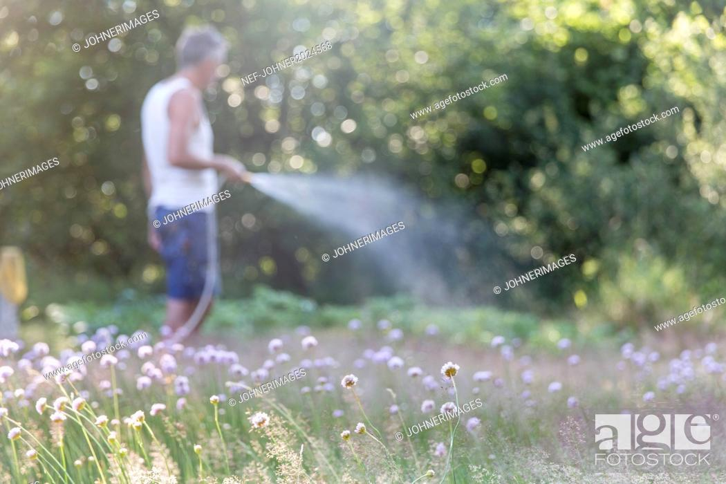 Imagen: Grass, man watering garden on background.