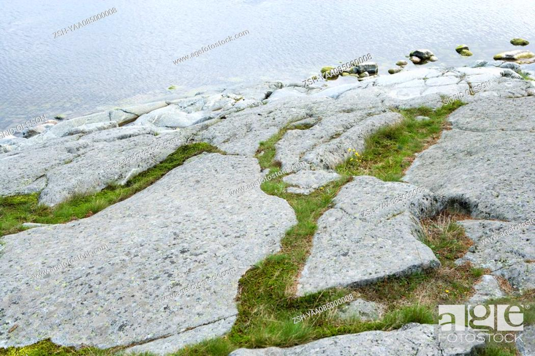 Stock Photo: Vegetation growing on rocky shore.