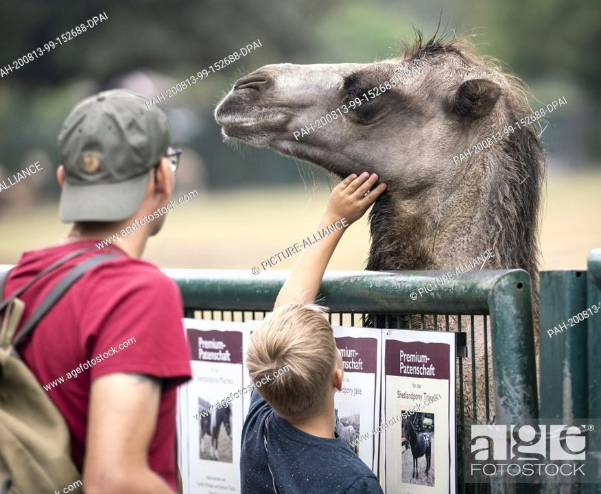Stock Photo: 13 August 2020, Hessen, Kronberg: Visitors stroke a clumsy oaf at the Kronberg Opel Zoo. At a press conference here shortly afterwards.