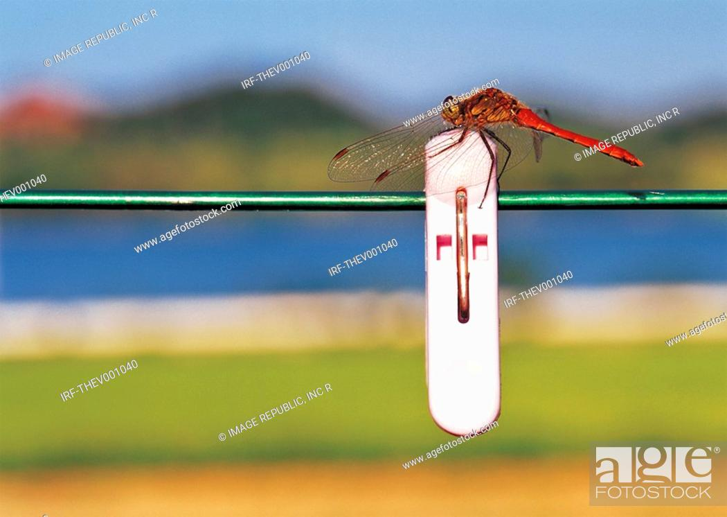 Stock Photo: dragonfly on the clothesline.