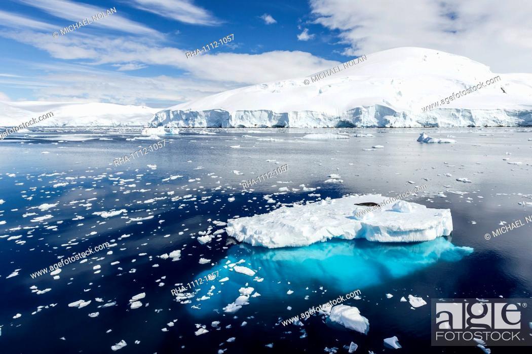 Imagen: Adult leopard seal (Hydrurga leptonyx), Snow Island, South Shetland Islands, Antarctica, Southern Ocean, Polar Regions.