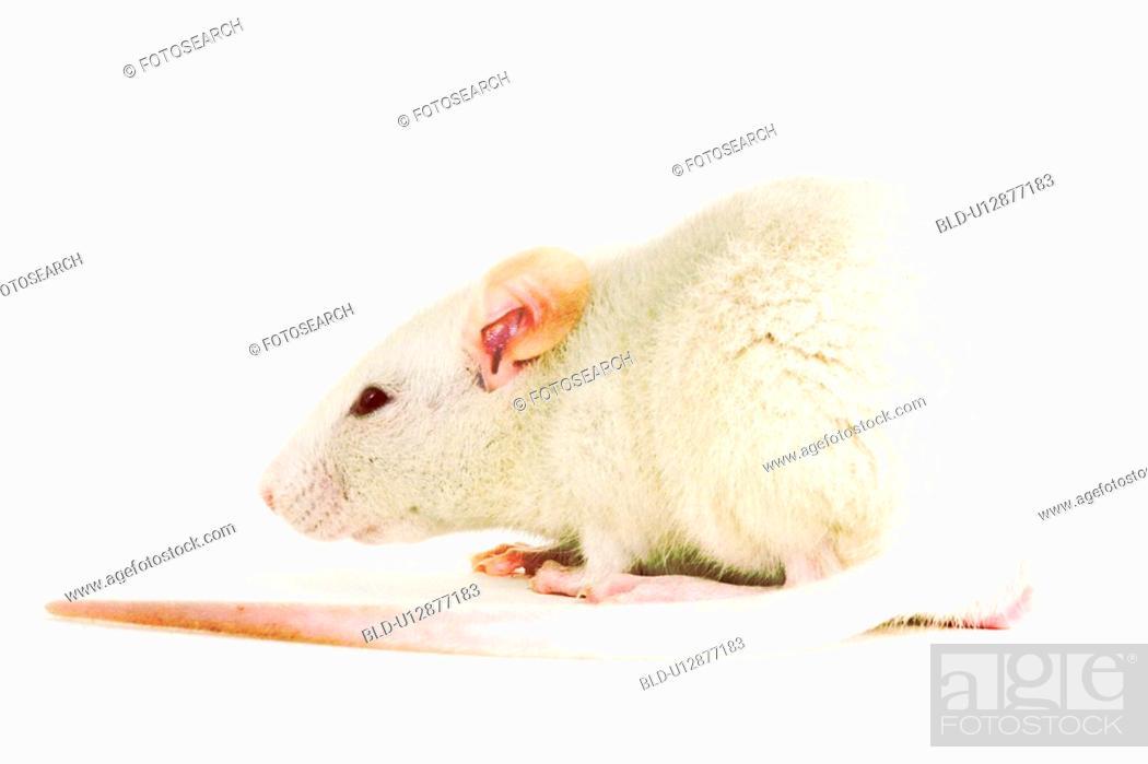Stock Photo: animals, close-up, CLOSE, alfred.