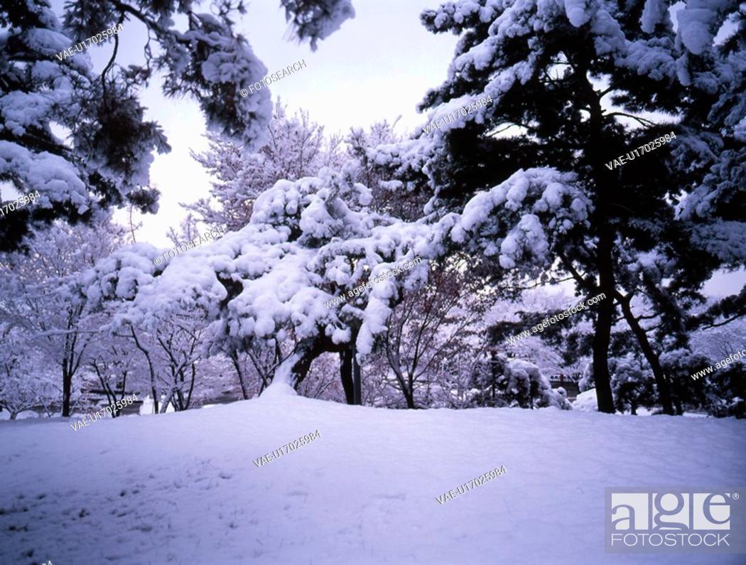 Stock Photo: plant, snow scene, snow, season, winter, winter scene.