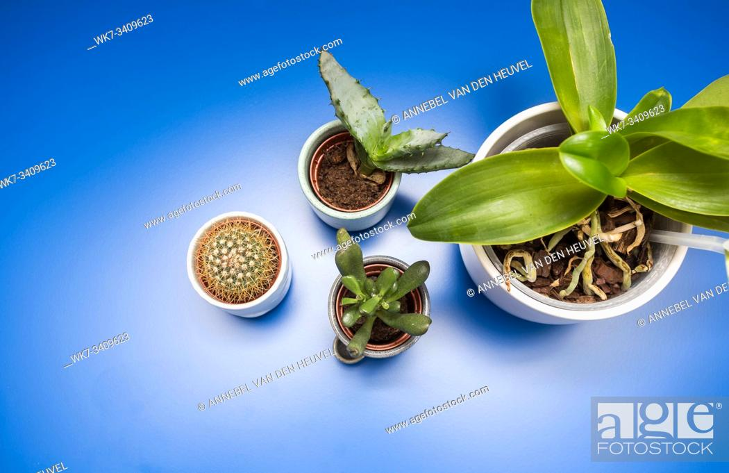 Stock Photo: Indoor trending various green house plants ceramic pots on blue background, top view modern design retro.
