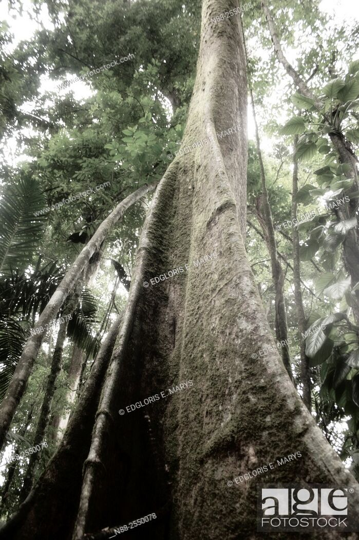Stock Photo: Jungle scene, Venezuela.