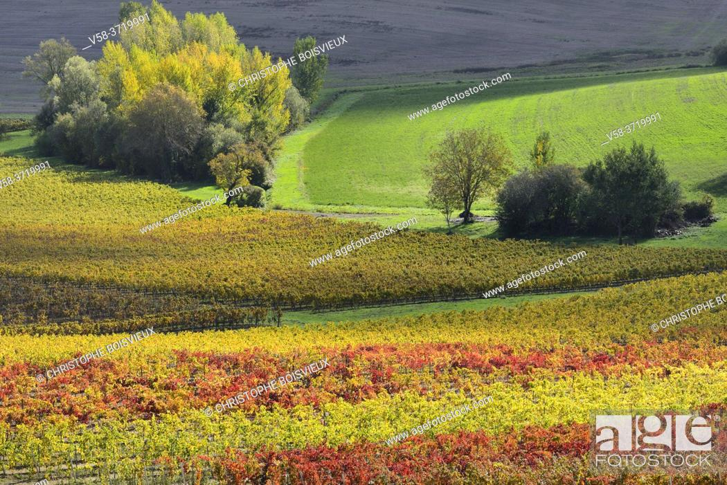 Stock Photo: France, Tarn, Lisle sur Tarn, Gaillac vineyard in autumn.