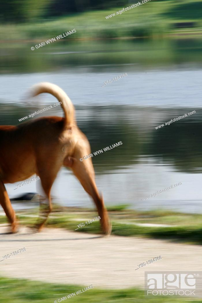 Stock Photo: fast dog running in park.