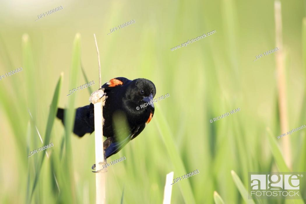 Stock Photo: Bird perched on twig.