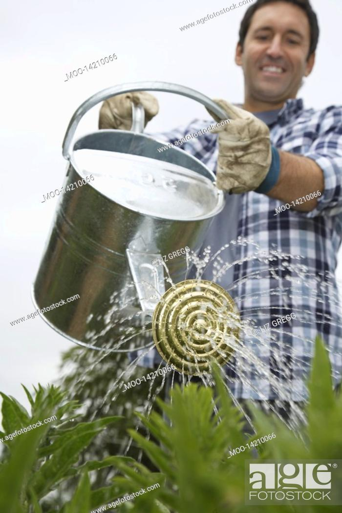 Stock Photo: Man watering crops in field.