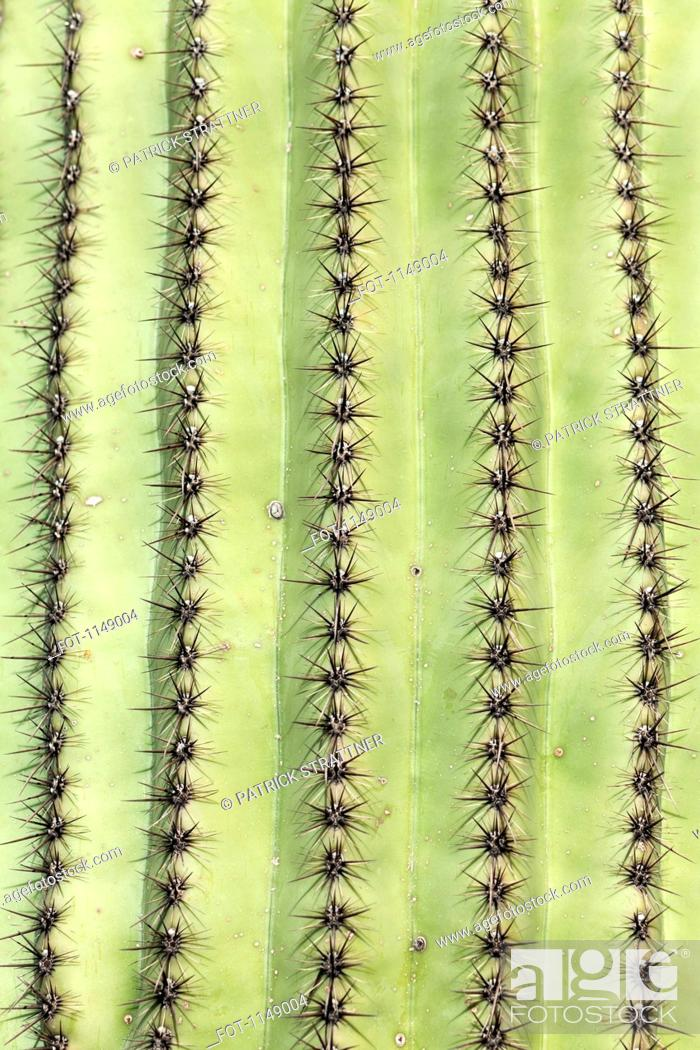 Stock Photo: Detail of a cactus.