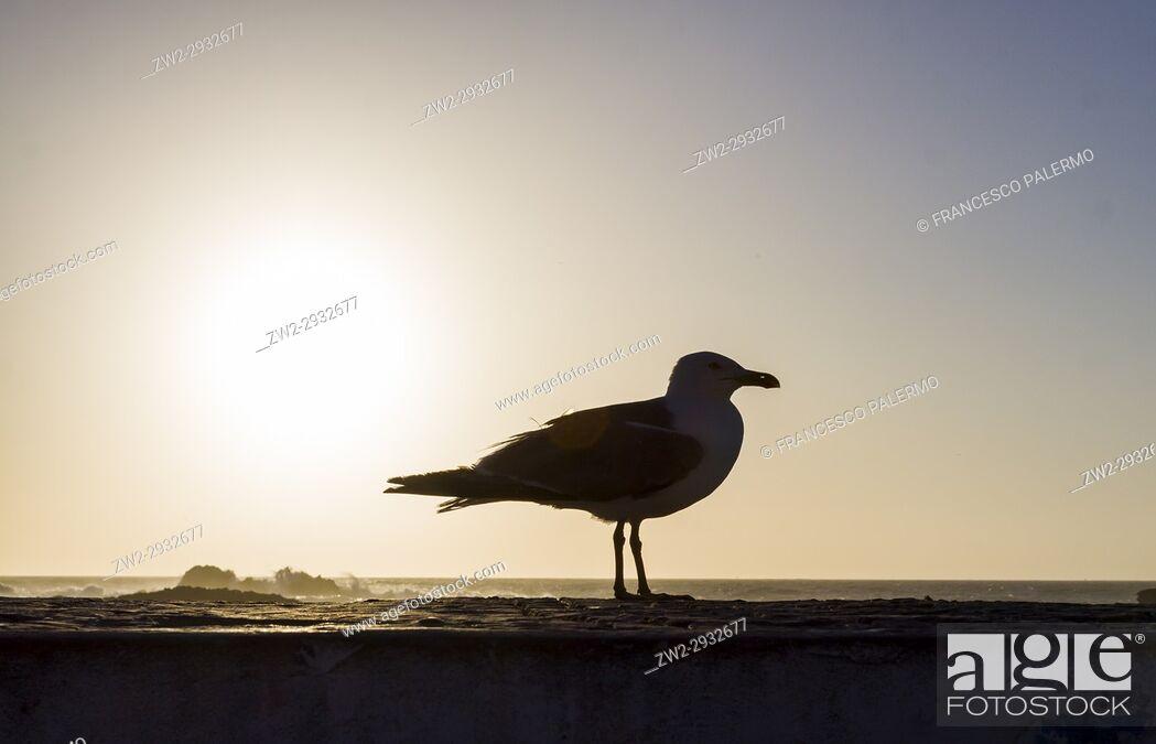Stock Photo: The seagull watch away of mogador city at dusk. Essaouira, Marrakech-Safi. Morocco.