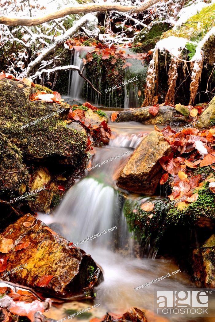 Stock Photo: Stream in La Pedrosa beech wood snowy in la Quesera mountain pass, Riaza, Segovia, Spain.