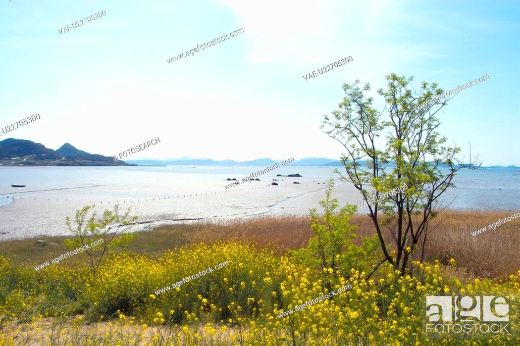 Stock Photo: plants, scenery, plant, flower, sea, flowers, nature.