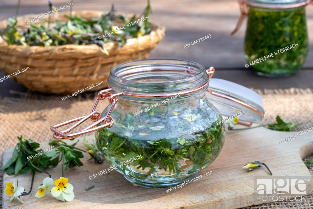Stock Photo: Preparation of homemade tincture from field pansy, or Viola arvensis plant.