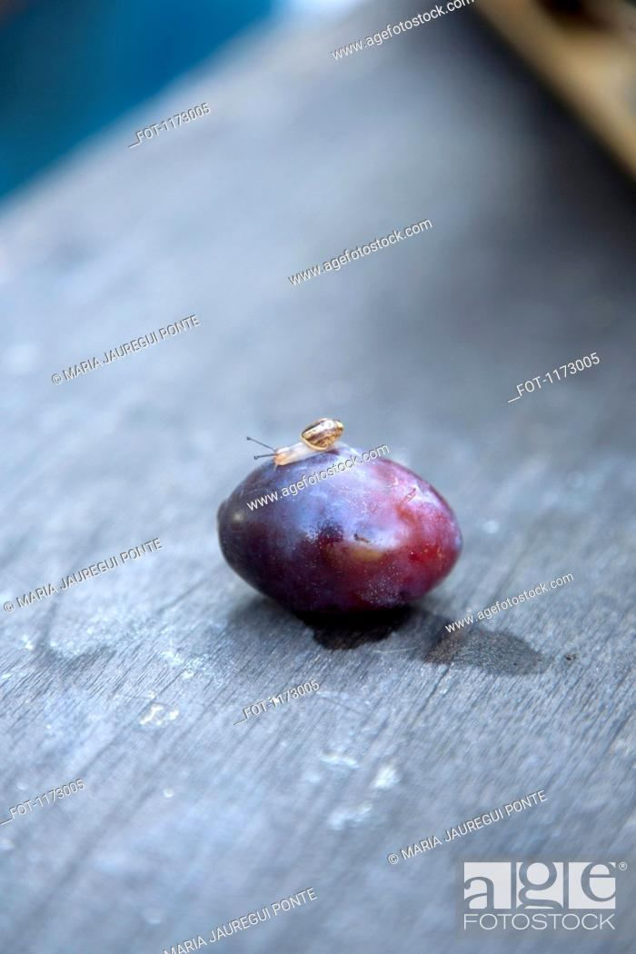 Stock Photo: Tiny snail on plum.