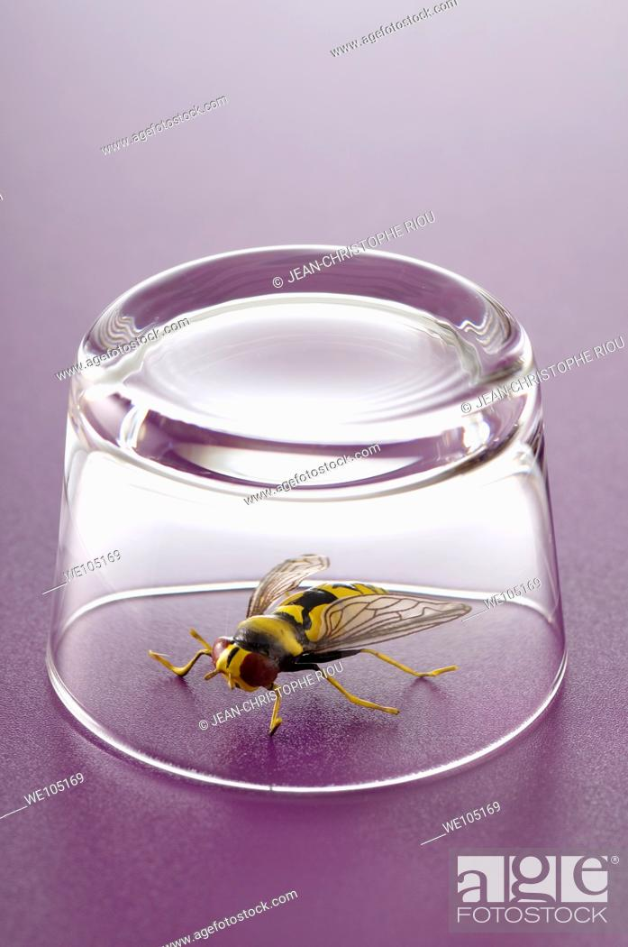 Stock Photo: A fly under a glass.