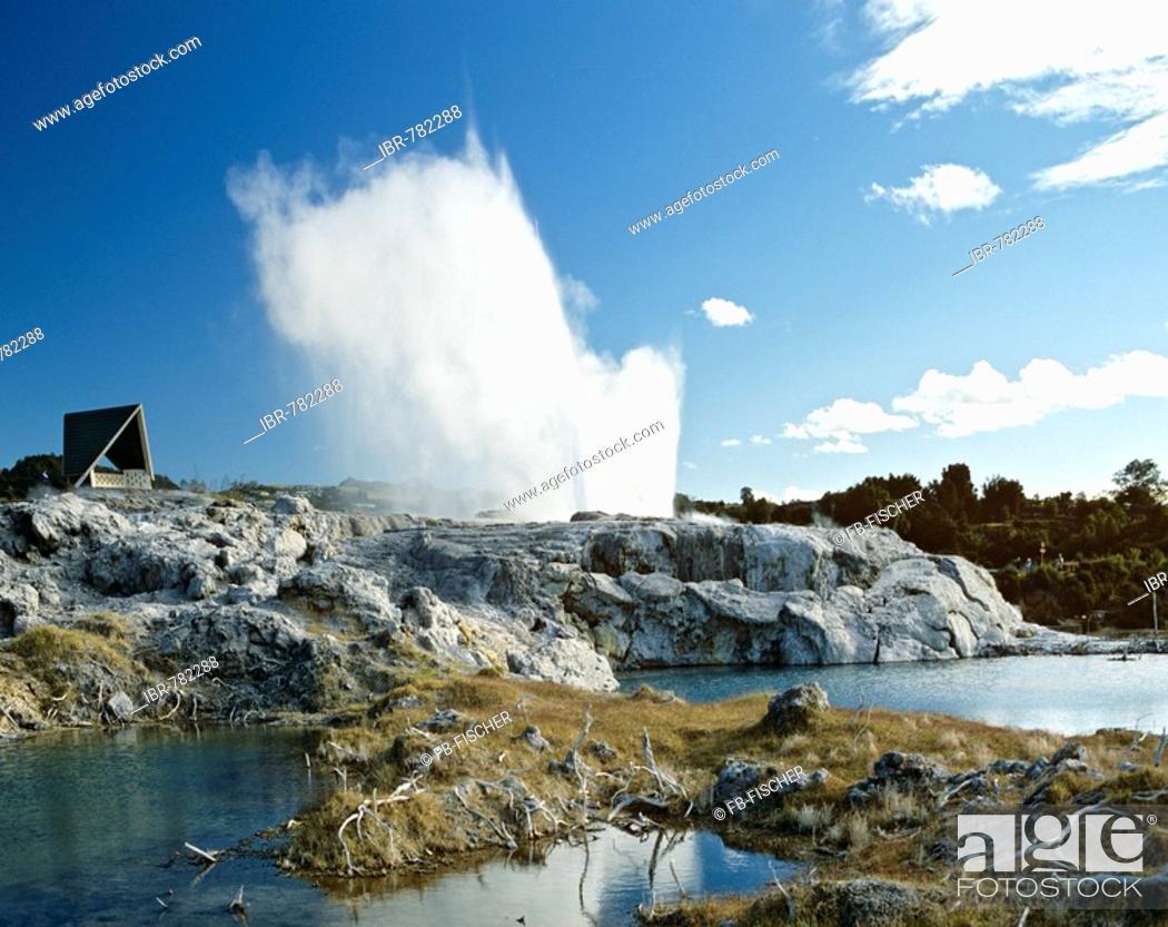 Stock Photo: Pohutu Geyser, Whakarewarewa geothermal area, Rotorua, North Island, New Zealand.
