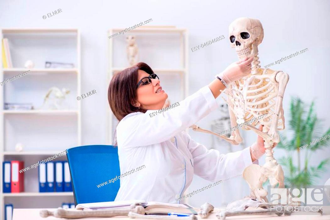 Stock Photo: Doctor working in the lab on skeleton.