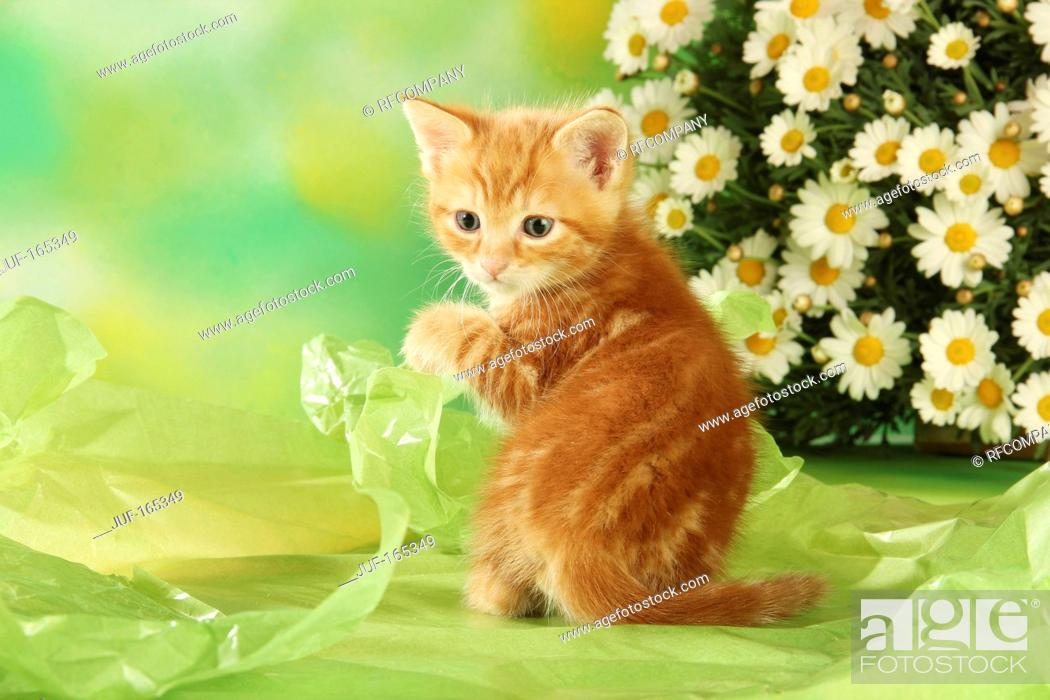 Stock Photo: domestic cat - kitten - sitting.