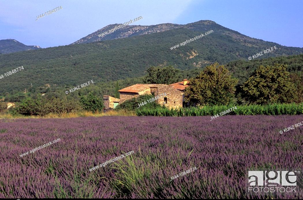 Stock Photo: France, Europe, lavender, at Sainte Jalle, Les Baronnies, Department Drome, Provence, field, agriculture, mountains, h.