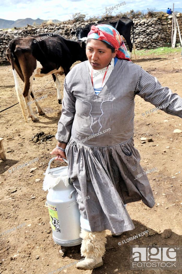 Stock Photo: Dairy cow farming, woman with milk churn, Altiplano Bolivian highland, Oruro Department, Bolivia, South America.