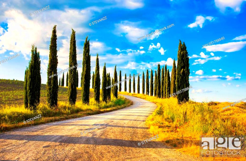 Stock Photo: Italian cypress trees rows and a white road rural landscape. Siena, Tuscany, Italy, Europe.