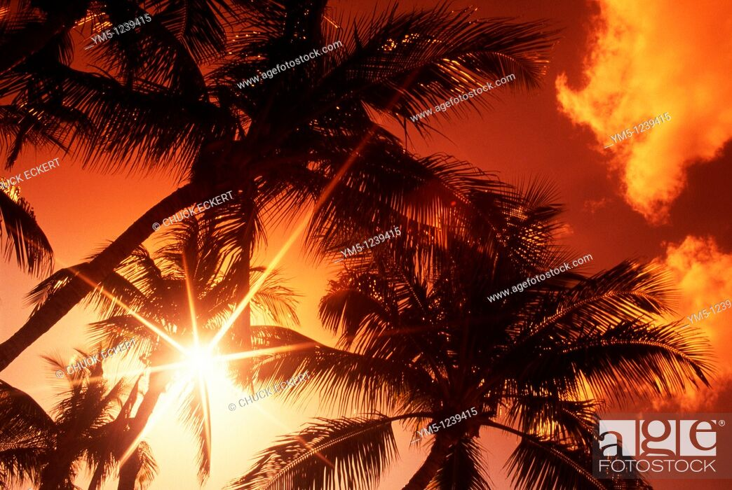 Stock Photo: Group of tropical Palm Trees Silhouetted.