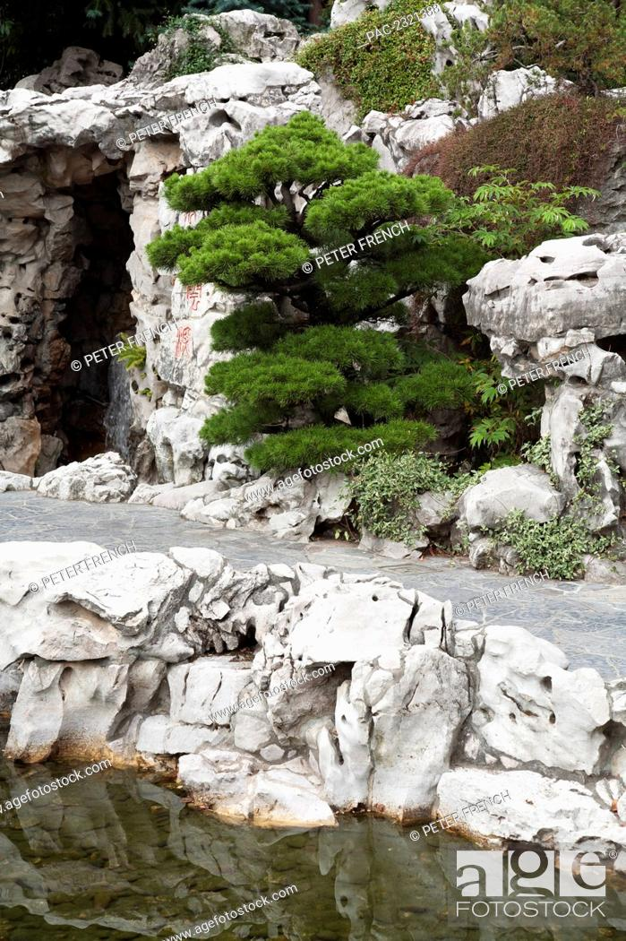 Oregon Portland Lan Su Chinese Gardens Bonsai Tree And White Rock Formations Stock Photo Picture And Rights Managed Image Pic Pac 2321388 Agefotostock