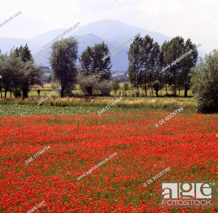 Imagen: Landscape with poppies and trees in the Aterno river valley, Abruzzo, Italy.