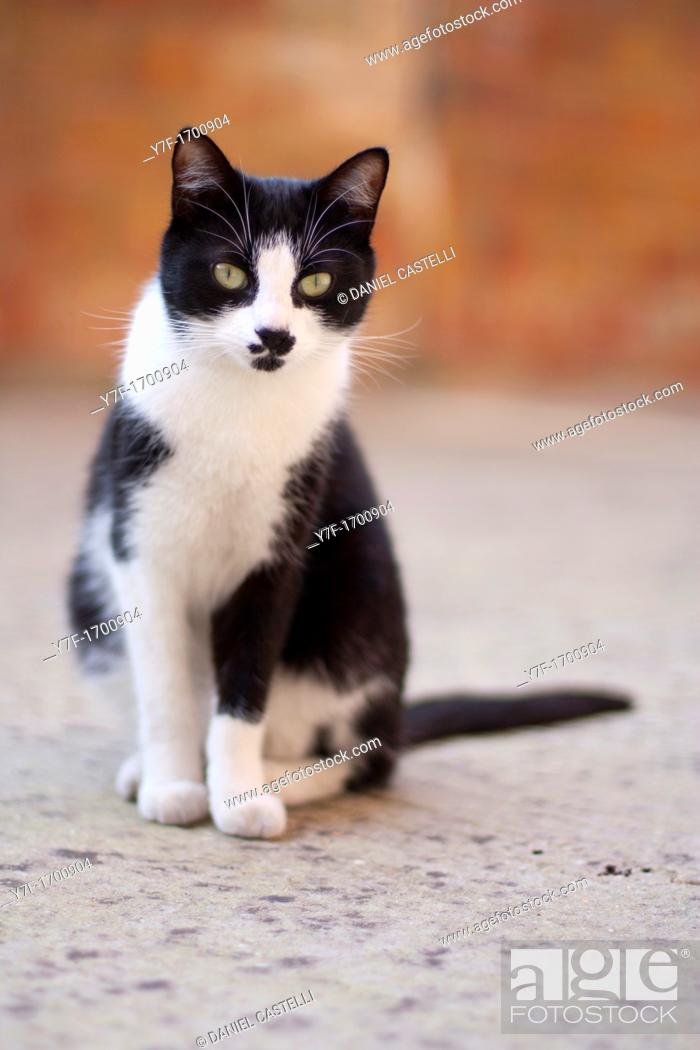 Stock Photo: Black and white cat sit down.