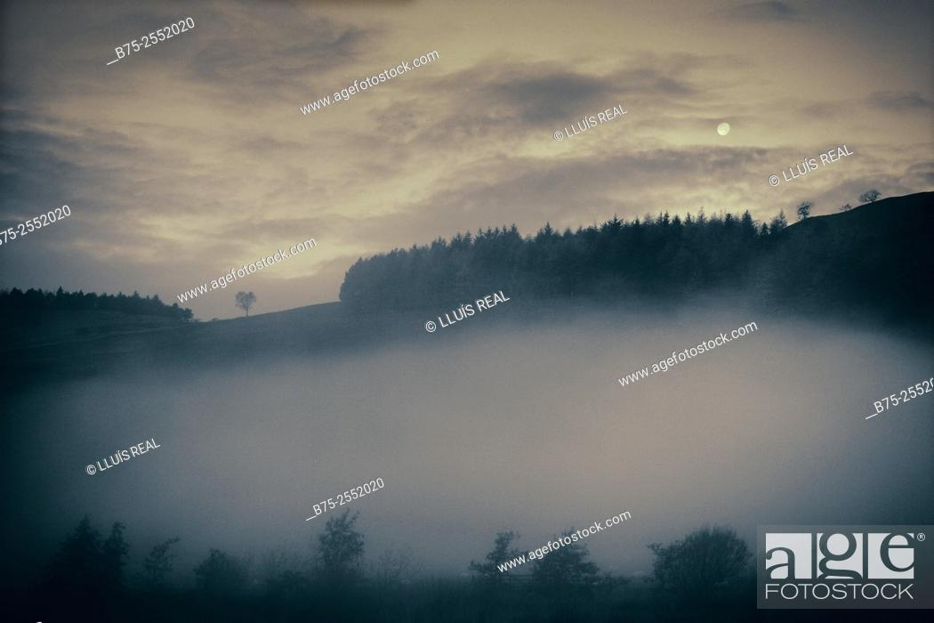 Stock Photo: Hills with forest areas in a misty day in Yorkshire Dales, North Yorkshire, Grassington, Skipton, England, UK, Europe.