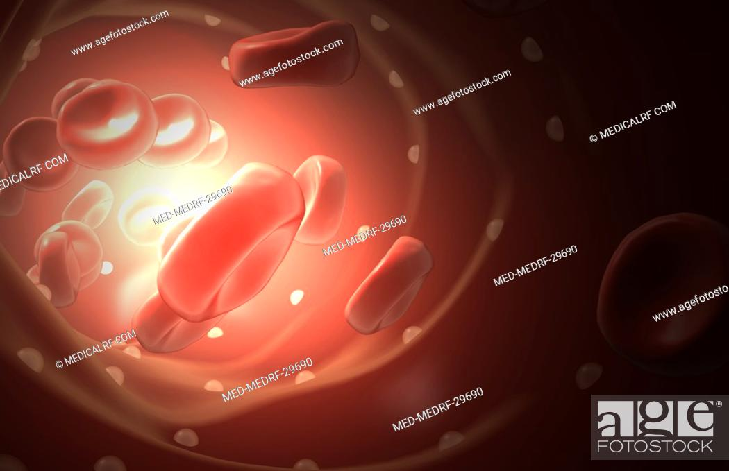 Stock Photo: Red blood cells.