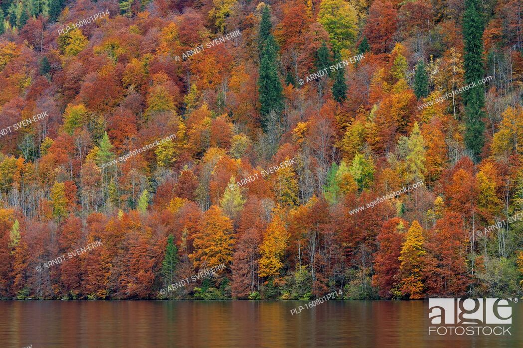 Stock Photo: Mixed forest showing autumn colours along Königssee / Kings lake, Berchtesgaden National Park, Bavarian Alps, Bavaria, Germany.
