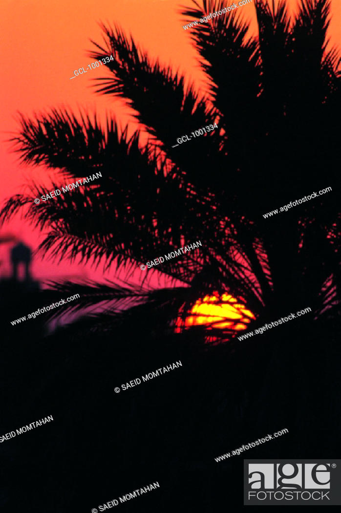 Stock Photo: Silhouette of a palm tree at sunset.