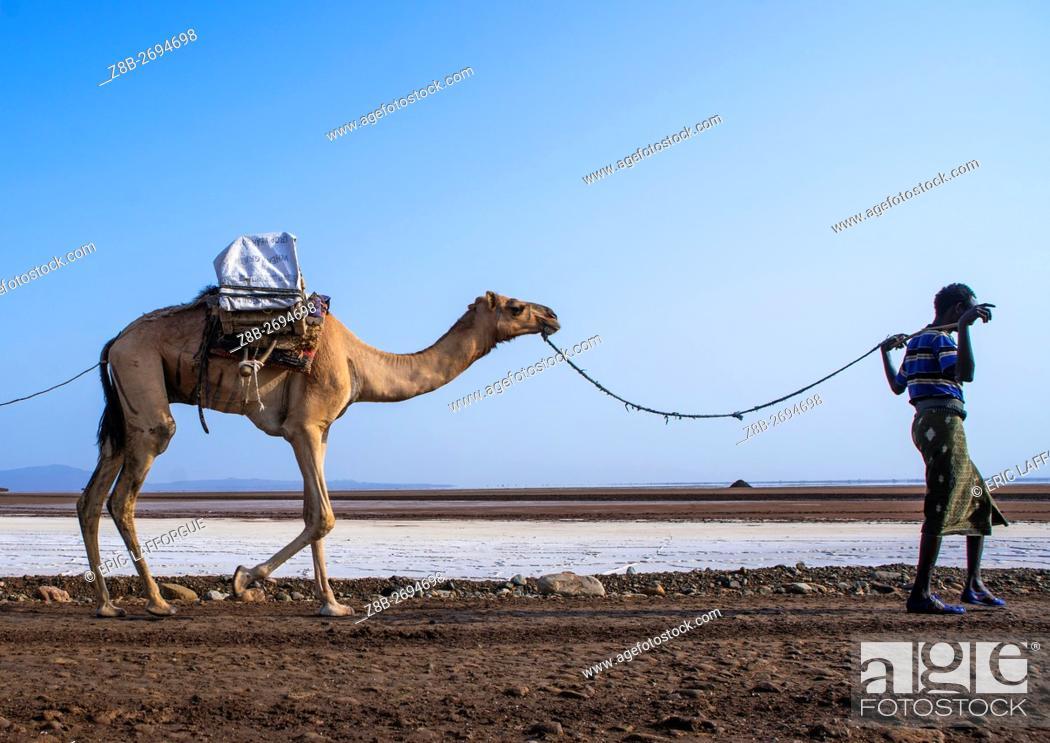 Stock Photo: Ethiopia, Afar Region, Dallol, afar tribe man camel caravans carrying salt blocks in the danakil depression.