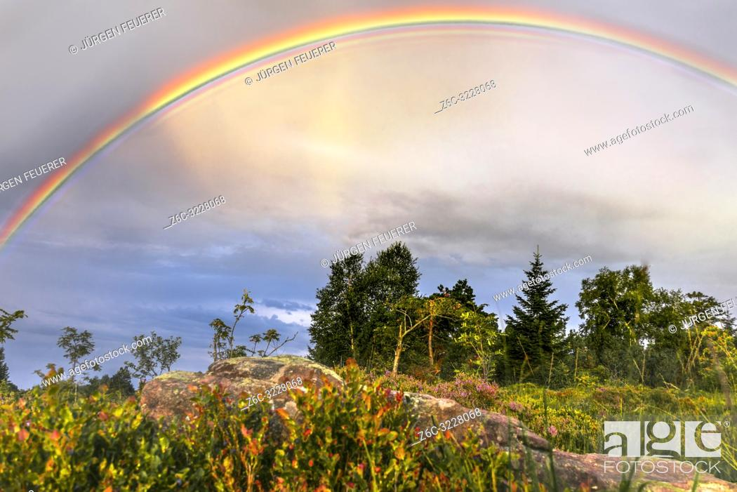 Imagen: rainbow over the landscape of the Black Forest, Germany, typical bunter sandstone and bilberry bushes in foreground, mountain Schliffkopf.
