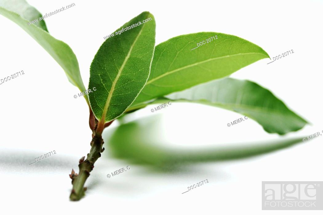 Stock Photo: bay leaf on white ground - blurred.