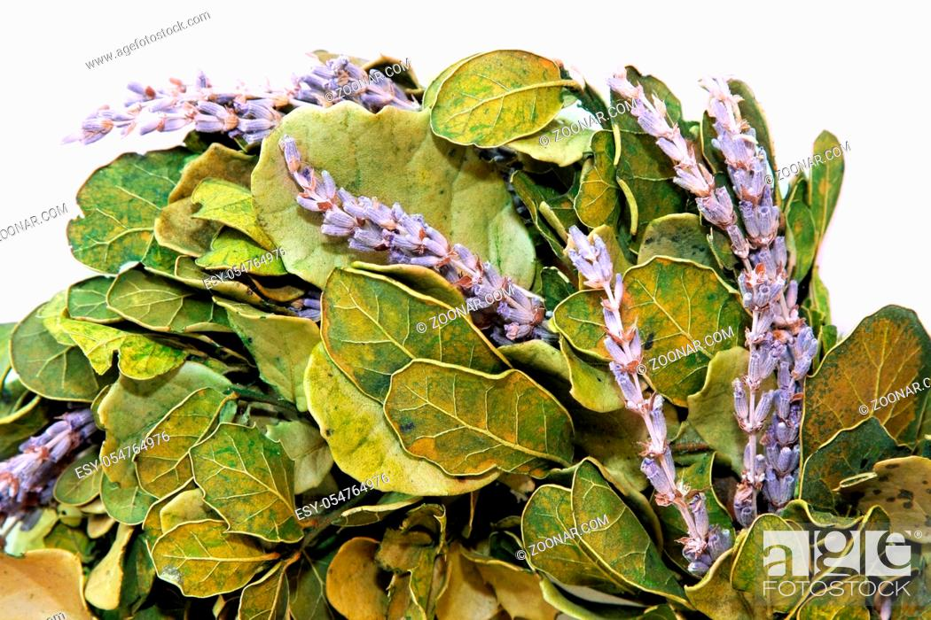 Stock Photo: Big fresh wreath with lavender and laurel leaves.